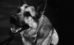 canine-hero-1